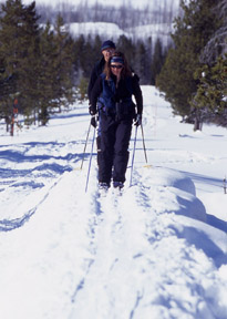 Cross-country skiers in Yellowstone