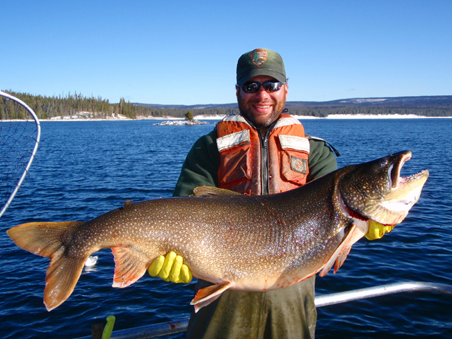 Giant lake trout