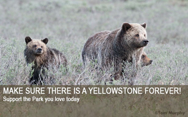 MAKE SURE THERE IS A YELLOWSTONE FOREVER!Support the Park you love today.