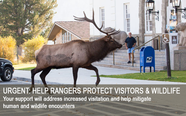 Urgent: Help Rangers Protect Visitors and Wildlife - Your support will address increased visitation and help mitigate human/wildlife encounters
