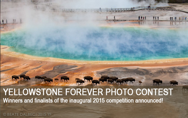 Yellowstone Forever Photo Contest. Winners and finalists of the inaugural 2015 competition announced!