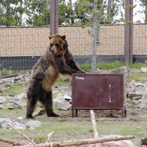 BearBoxesforCampgrounds