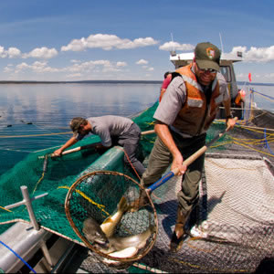 Fisheries Conservation